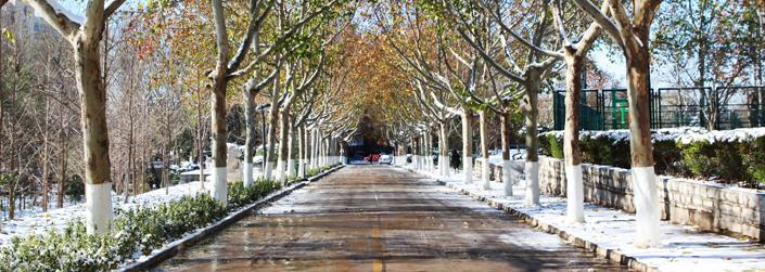 无暇顾及身边的风景,也很少去享受济南的冬天.